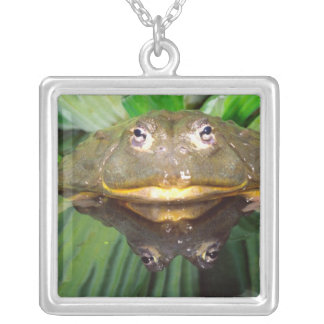 African Burrowing Bullfrog, Pyxicephalus 2 Silver Plated Necklace