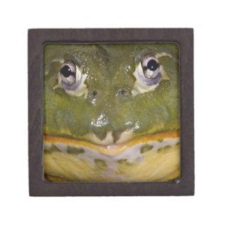 African Burrowing Bullfrog, Pyxicephalus Keepsake Box