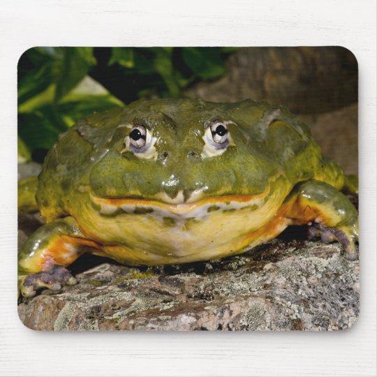African Burrowing Bullfrog, Pyxicephalus Mouse Pad