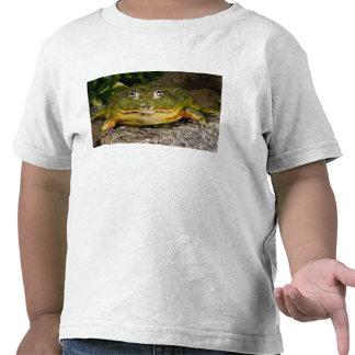 African Burrowing Bullfrog, Pyxicephalus Tshirts