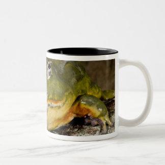 African Burrowing Bullfrog, Pyxicephalus Two-Tone Coffee Mug