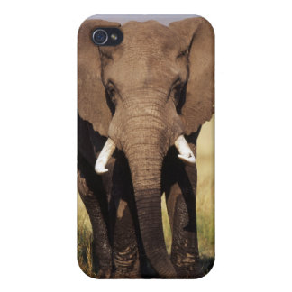 African Bush Elephant iPhone 4/4S Cover
