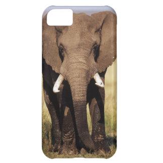 African Bush Elephant iPhone 5C Case