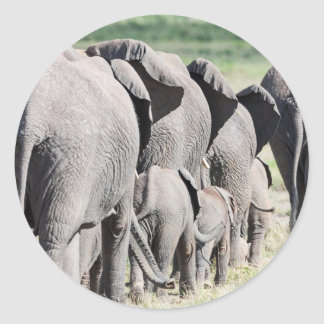 African Bush Elephant (Loxodonta Africana) 4 Classic Round Sticker