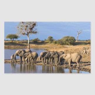 African Bush Elephant (Loxodonta Africana) Herd Rectangular Sticker