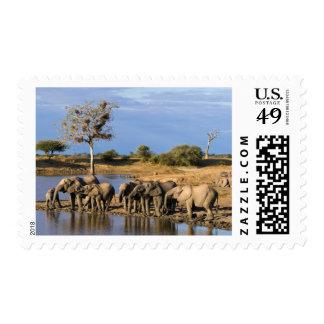 African Bush Elephant (Loxodonta Africana) Herd Stamp