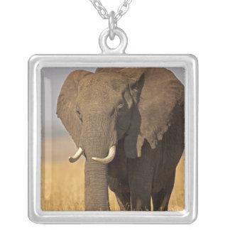 African Bush Elephant Loxodonta africana) on Square Pendant Necklace