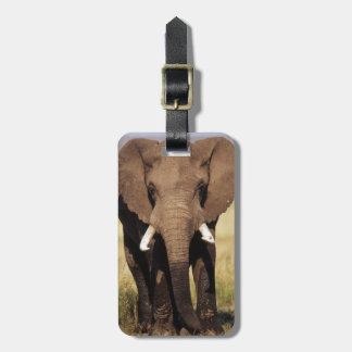 African Bush Elephant Luggage Tag