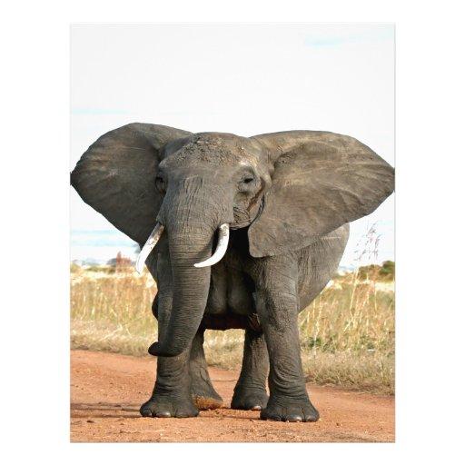 African Bush Elephant Marching to success goal Letterhead Design