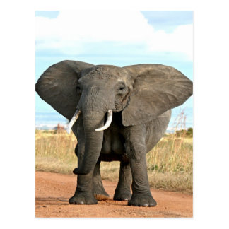 African Bush Elephant Marching to success goal Postcard