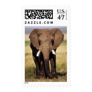 African Bush Elephant Postage Stamp