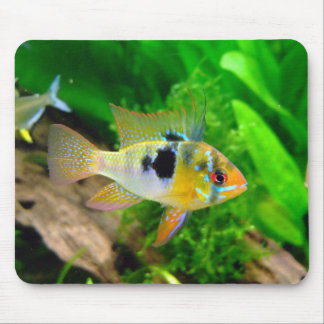 African Butterfly Cichlid Mouse Pad