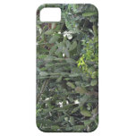 African cactus iPhone 5 covers