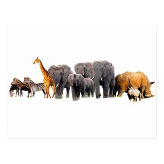 African Collage III Postcard