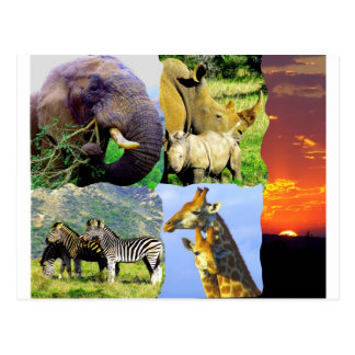 African Collage Postcard