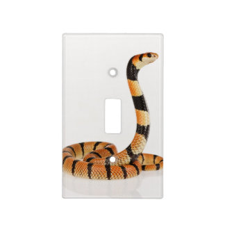 African coral snake (Aspidelaps lubricus) Light Switch Cover