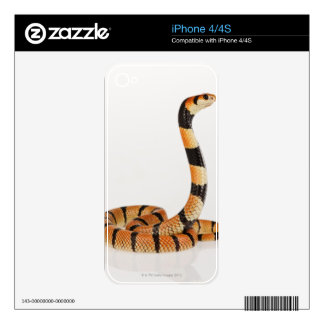 African coral snake (Aspidelaps lubricus) Skin For iPhone 4