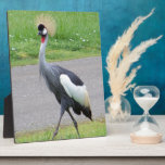 African Crested Crane Display Plaques