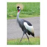 African Crested Crane Letterhead Design