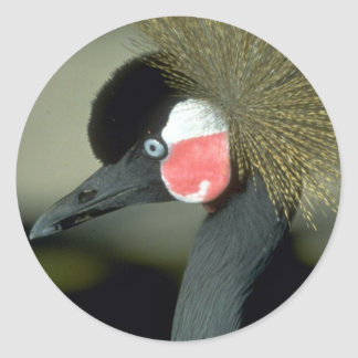 African crowned crane striking head-dress round stickers