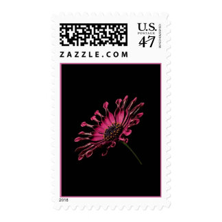 African Daily on Black Background Postage