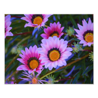African Daisies - colorized Photographic Print