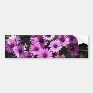 African Daisies Flower Photo Bumper Sticker