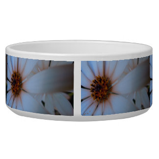 African Daisies I Bowl