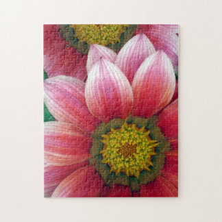 African Daisies Jigsaw Puzzles