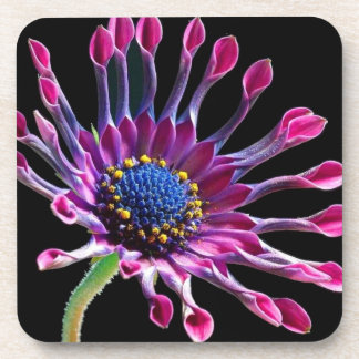 African Daisy Beverage Coaster