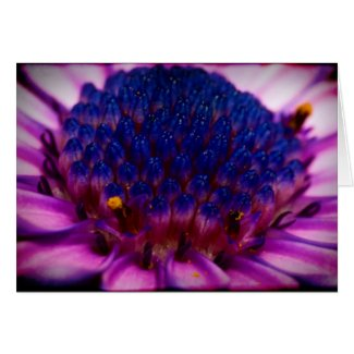 African Daisy Blossom Mother's Day Card card