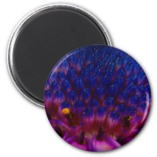 African Daisy Blossom Round Magnet magnet