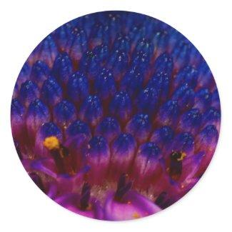African Daisy Blossom Round Sticker sticker