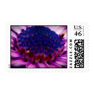 African Daisy Blossom Stamp stamp