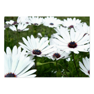 African Daisy Large Business Cards (Pack Of 100)