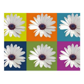 African Daisy Collage Postcards
