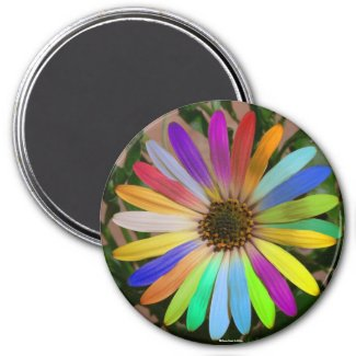 African Daisy Colorful-Magnet magnet