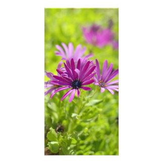 African Daisy Flower Photo Card
