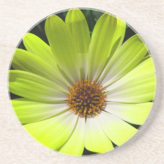 African Daisy Fluorescent Yellow Coasters
