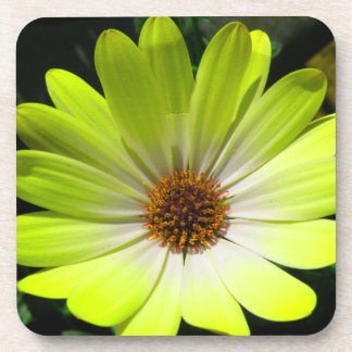 African Daisy Fluorescent Yellow Cork Coaster