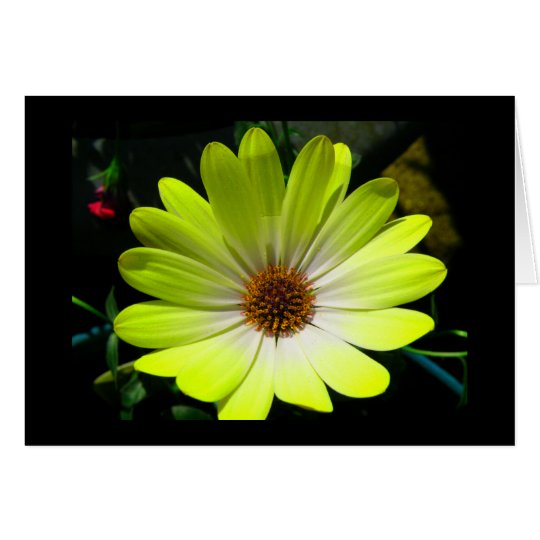 African Daisy Fluorescent Yellow Greeting Card