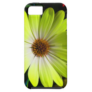 African Daisy Fluorescent Yellow iPhone 5 Case