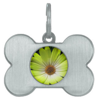 African Daisy Fluorescent Yellow Pet Tag