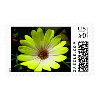 African Daisy Fluorescent Yellow US Postage Stamp