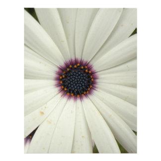African Daisy Flyer