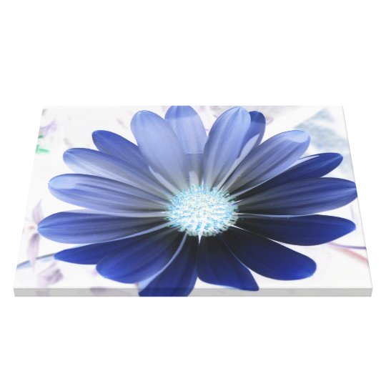 African Daisy Glowing Blue Canvas Print