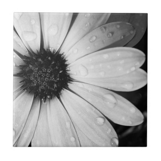African Daisy in Black and White Ceramic Tiles