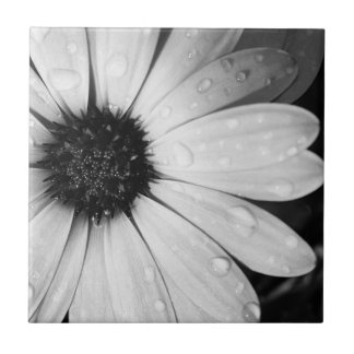 African Daisy in Black and White Tile