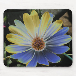 African Daisy Lapis and Gold Mousepad