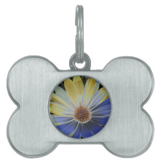African Daisy Lapis and Gold Pet Tag